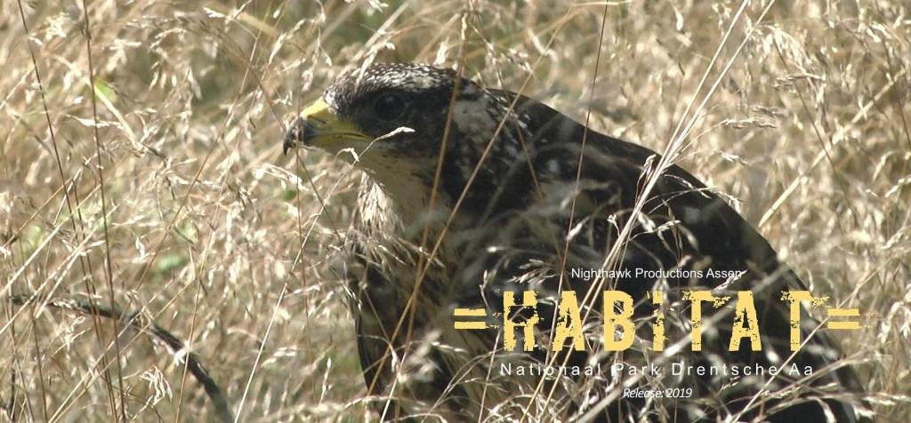 De Wespendief. Voor het item in =HABITAT= volgden Henk en Janetta deze vogel enkele weken lang...