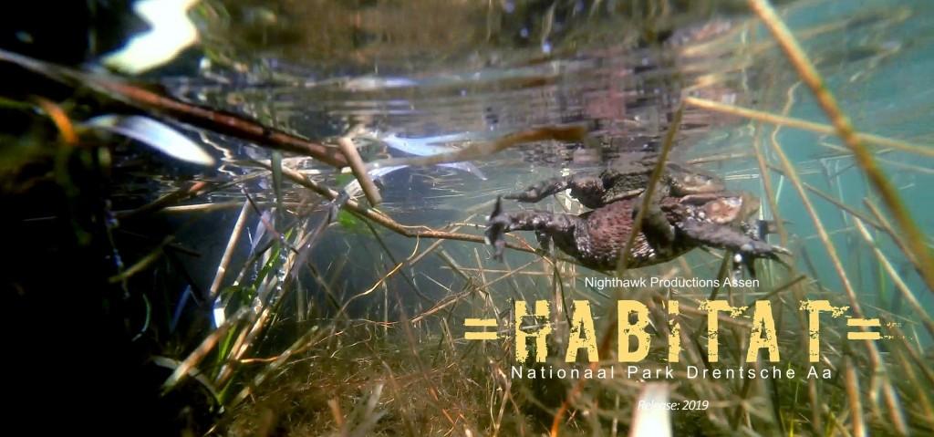 Een van de eerste items voor hun nieuwe natuurfilm =HABITAT= was een bezoek aan de voortplantingswateren van de pad. Dat leverde spectaculaire beelden op!